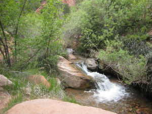 Kanarra Creek flowing over rocks and boulders in heavy underbrush